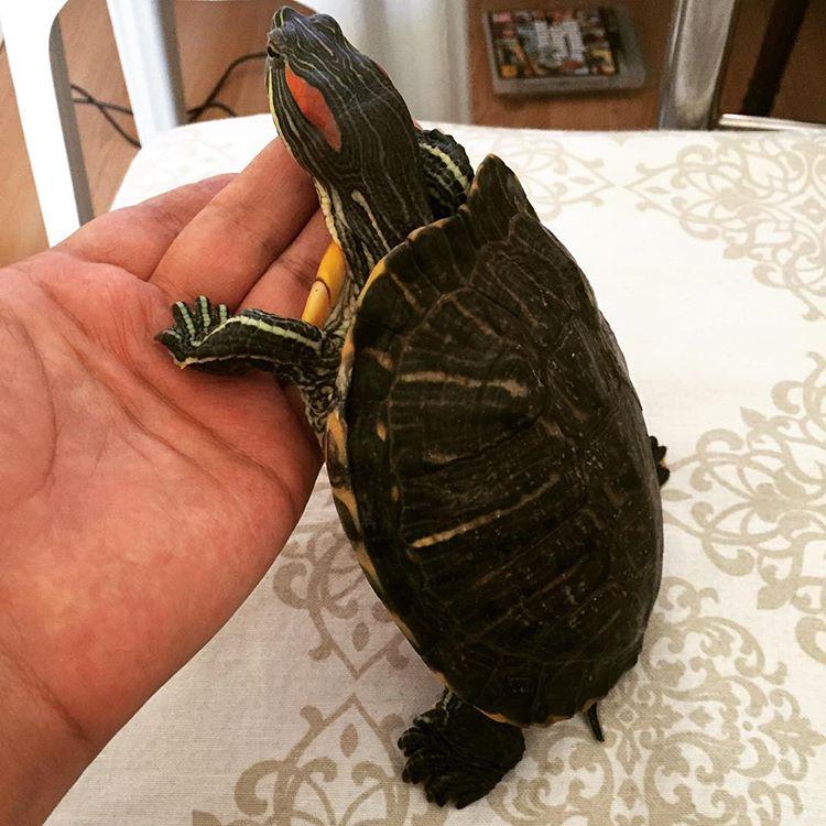 su kaplumbağası akvaryumu
