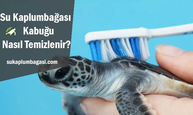 Su Kaplumbağası Kabuğu Nasıl Temizlenir