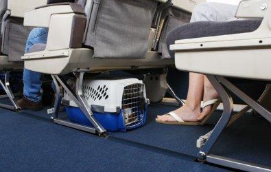 Uçakla hayvan taşıma prosedürü